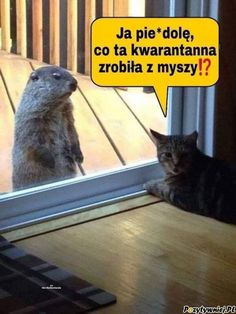 Funny Animal Memes, Cute Funny Animals, Funny Animal Pictures, Funny Cute, Cute Cats, Funny Memes, Funny Pics, Funny Kitties, Meme Pictures