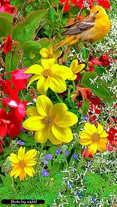 Beauty of World is part of Beautiful flowers wallpapers - Beauty of World likes Photographer Beautiful Flowers Garden, Flowers Nature, Exotic Flowers, Amazing Flowers, Beautiful Roses, Yellow Flowers, Pretty Flowers, Colorful Flowers, Beautiful Gardens