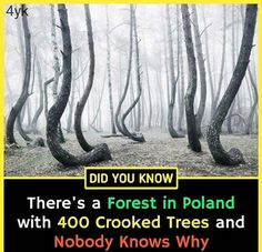 Interesting Science Facts, Amazing Science Facts, Interesting Facts About World, Amazing Facts, Wow Facts, Real Facts, Wtf Fun Facts, Physiological Facts, Psychology Fun Facts