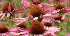 Bei Erkältungen und Grippe muss nicht immer gleich ins Medizinfach gegriffen werden. Diese Pflanzen helfen dir beim Vorbeugen und der Genesung.