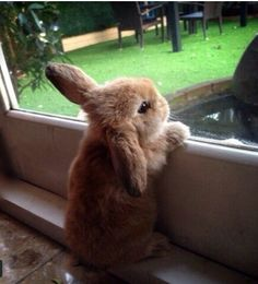 Learn About Pet Rabbit – Gloria Love Pets - Cutest Baby Animals Cute Baby Bunnies, Baby Animals Super Cute, Cute Little Animals, Cute Funny Animals, Bunny Bunny, Bunny Rabbits, Funny Bunnies, Funny Pets, Dwarf Bunnies