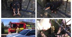 Poor pooch Milo had an eventful afternoon on Monday when he tried to join his family for a stroll in the sunshine.