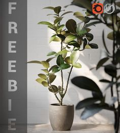 3d Plant Model 411 Free Download By Héctor Diez Trees To Plant, Plant Leaves, Ficus Elastica, The Slate, Spanish Artists, 3ds Max, Plants, Free, Instagram