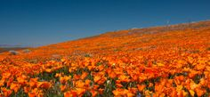 A rolling landscape filled with thousands of brightpoppies make the Antelope Valley Poppy Reserve one of the most gorgeous sights in the country, let alone the state of California. Tour real-life secret gardens across the country»