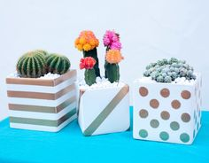 Diy Basics: Gold Patterned Cactus Planters