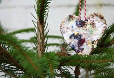Christmas bird cakes. Don't forget to feed the birds this Christmas!