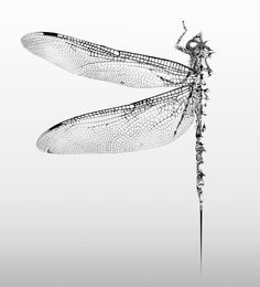 Gorgeous Pen and Ink Wildlife by Si Scott insects illustration black and white animals