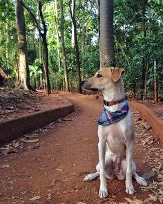 Não sei vocês mas eu adoro um mato! #viralata #viralataslove #petsofinstagram #puppy #adocaoresponsavel by manchitaviralata http://ift.tt/1RzxBYx