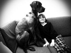 Great Dane - Duitse dog