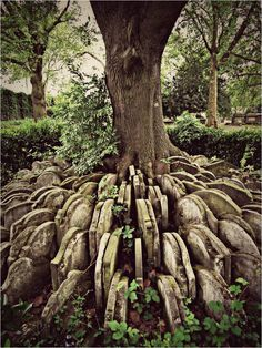 The Hardy Tree In the churchyard of St Pancras Old Church in London, hundreds of old gravestones circle an ash tree. In the 1860's an older part of the churchyard was designated to make way for a new railway line. Coffins were removed with care and reburied elsewhere. Some of the headstones were placed in a circular pattern around a young ash tree in the churchyard. Over the decades the tree has, inevitably grown and parts of the headstones nearest the tree have disappeared in to its growth.