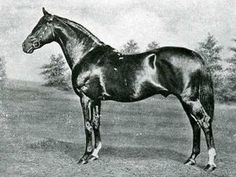 Cyllene(1895)(Colt)Bona Vista- Arcadia By Isonomy. 4x4 To Stockwell, 5x4 To Newminster, 5(C)x5(C)x5(F) To Pocahontas. 11 Starts 9 Wins 1 Second 1 Third. Won Ascot Gold Cup(Eng), Jockey Club S(Eng), Newmarket S(Eng). Leading Sire In Eng & Ire In 1909 & 1910. Leading Sire In Argentina In 1913. Sire Of Polymelus. Died In 1925.