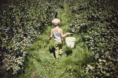 Picking blueberries. (C) Ali Walker Photography