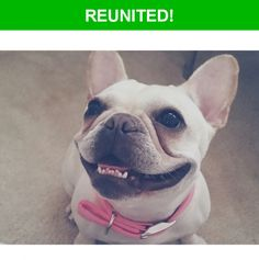 Great news! Happy to report that Zoe has been reunited and is now home safe and sound! :)