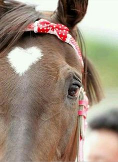 The heart on this horse is perfect! Reminds me of my baby, my love child, Lisa Nicole, .my horse lover. She has an abundance of passion and love for horses♥ All The Pretty Horses, Beautiful Horses, Animals Beautiful, Cute Animals, Barnyard Animals, Heart In Nature, All Nature, Le Zoo, Tier Fotos