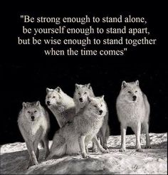 Discover and share She Wolf Quotes. Explore our collection of motivational and famous quotes by authors you know and love. Native American Wolf, Native American Wisdom, American Indian Quotes, American Symbols, American Women, American Indians, American Art, Citation Encouragement, Great Quotes