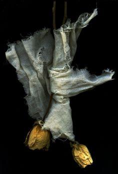 "sweetpeapath: ""by Tim Lee "" Wabi Sabi, Still Life Photography, Fine Art Photography, Still Life 2, Fotografia Macro, Foto Art, Vanitas, Mellow Yellow, Black Backgrounds"