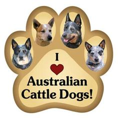 Check out the deal on I Love My Australian Cattle Dogs - Paw Magnet at Sticker Shoppe Australian Cattle Dog Red, Aussie Cattle Dog, Austrailian Cattle Dog, Australian Puppies, Dog Information, Dog Rules, Dog Paws, Dogs And Puppies, Doggies