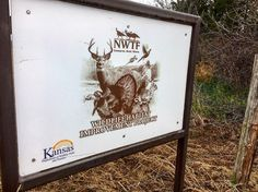 NWTF funding wildlife habitat with KS F&G dept. all funded by hunter $ and donations. We found bobwhites pheas. whitetail's cottontails Harris sparrows harriers cardinals doves coyotes kingfisher red tailed hawk kestrel juncos fox squirrels and more here. Habitat is THE key to wildlife abundance. #whywehunt #quailhunting #uplandhunting #wildlifehabitat #hunting #hunters #nwtf @official_nwtf #ronspomeroutdoors
