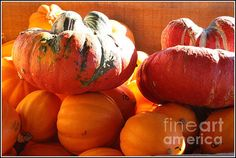 Fantastic capture of these beautiful pumpkins and gourds! Gorgeous light, color and composition!