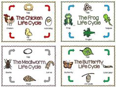 Life Cycle Posters! These are great!!