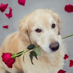6 Strong Reasons You Should Cuddle Your Dog More Often Animals And Pets, Funny Animals, Cute Animals, I Love Dogs, Cute Dogs, Dog Cuddles, Dog Nose, Golden Star, My Animal