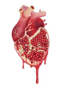 Pomegranate Heart of granada The Art of Caitlin Davis Arte Com Grey's Anatomy, Anatomy Art, Pomegranate Art, Pomegranate Tattoo, Arte Dope, Tatoo Henna, Hades And Persephone, Grenade, Medical Art