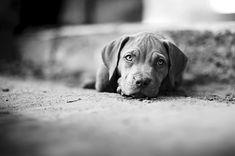 Cute pup and great depth of field, Manuel Orero via 500px.com
