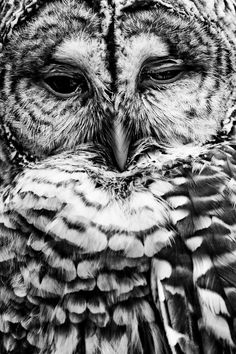 What a wonderful picture of an owl. He does indeed look wise.