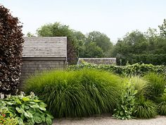 Boxwood, privet, holly—garden designer Sean Conway composed this hedge with tall, breezy grasses. A seven-foot-tall maiden grass (Miscanthus sinensis 'Gracillimus'), along with several smaller stands of dwarf fountain grass. Via Country Living magazine. Miscanthus Sinensis Gracillimus, Front Yard Landscaping, Backyard Landscaping, Landscaping Ideas, Backyard Ideas, Grass Alternative, Garden Hedges, No Grass Backyard, Gardening