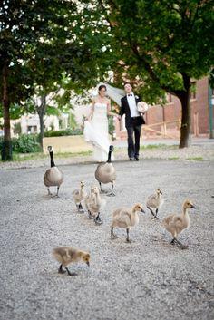 Wedding photography: Lorenzo De Gregorio