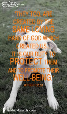 """They too, are created by the same loving hand of God which Created us...It is our duty to Protect Them and to promote their well-being.""    Mother Teresa  www.hendrickboards.com"