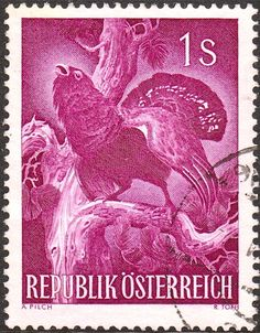 Western capercaillie, 1959