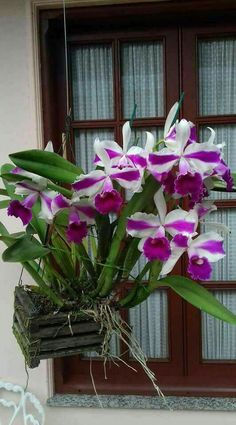Exotic Flowers, Amazing Flowers, Garden Plants, House Plants, Orchid Cake, Cattleya Orchid, Beautiful Flowers Wallpapers, Love Rose, Flower Wallpaper