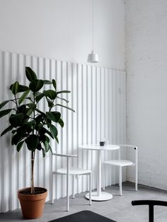 Russian studio Asketik has designed this bright white interior for Bloom-n-Brew, a new café in Moscow which occupies a former Soviet silk factory. Coffee Shop Interior Design, Coffee Shop Design, Cafe Design, White Cafe, Minimalist Interior, Restaurant Design, White Restaurant, Retail Design, Interiores Design