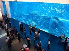 Dubai Mall  Illustration   Description   Dubai Mall Aquarium     – Read More –