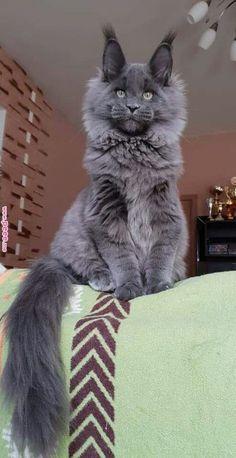 Courrier - Milène Kerleroux - Outlook Cute Funny Animals, Cute Baby Animals, Animals And Pets, Funny Cats, Pretty Cats, Beautiful Cats, Animals Beautiful, Cute Cats And Kittens, Kittens Cutest