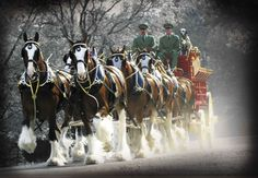 Who else can't wait for the clydesdales? #SuperBowl #Budweiser #BeerLovesYou