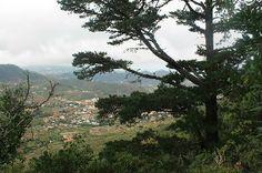 El Parque Rural de Anaga y la enología se fusionan en una ruta en Tegueste http://www.rural64.com/st/turismorural/El-Parque-Rural-de-Anaga-y-la-enologia-se-fusionan-en-una-ruta-en-Tegu-6463