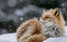 Banho de Neve