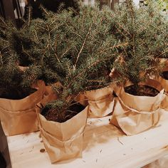 Place mini trees wrapped in brown paper and string around the house for a nostalgic, low-key look.