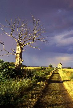 Track to St Peter On The Wall church Bradwell, Essex England. by Peter Stephenson, dates from 654 AD