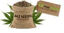 Marijuana Seeds Reviews - Marijuana Seed Bank Ratings