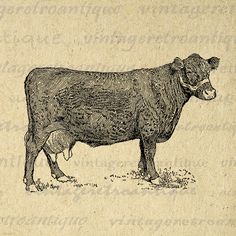 Digital Farm Cow Printable Graphic Illustration Image Download Vintage Clip Art Jpg Png Eps 18x18 HQ 300dpi No.3174 @ vintageretroantique.etsy.com #DigitalArt #Printable #Art #VintageRetroAntique #Digital #Clipart #Download