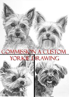 Custom Charcoal Pencil Yorkie Drawing Your Yorkshire Terrier Sketched