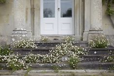 Erigeron karvinskianus forms a romantic froth around the steps at florist Polly Nicholson's house in Wiltshire, England. See more at Bayntun Flowers: Florist Polly Nicholson's Walled Garden in Wiltshire. Photograph by Britt Willoughby Dyer.