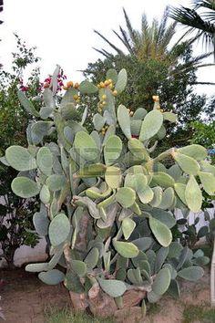 Cactus Stock Photos, Plants, Cactus, Pictures, Plant, Planting, Planets
