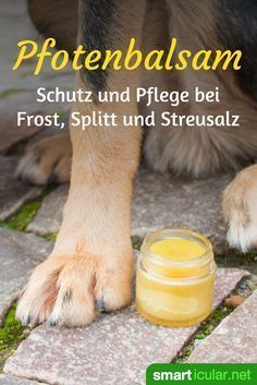 Pflegenden und schützenden Pfotenbalsam für Hunde selber machen In order to protect and care for the paws of your four-legged friend even in winter, you can easily make a balm from natural ingredients yourself. Pet Dogs, Dogs And Puppies, Training Your Dog, Four Legged, Dog Care, Dog Mom, Animals And Pets, Dog Food Recipes, The Balm