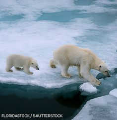 """Now is the time to say """"No!"""" to risky oil drilling in America's Arctic Ocean"""