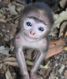 Such Bright eyes.... So freaking cute