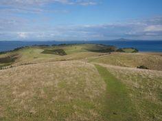 Sheep from lookout on Shakespear Park, Auckland New Zealand